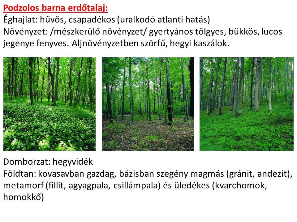 Podzolos barna erdőtalaj: Éghajlat: hűvös, csapadékos (uralkodó atlanti hatás) Növényzet: /mészkerülő növényzet/ gyertyános tölgyes, bükkös, lucos jegenye fenyves.