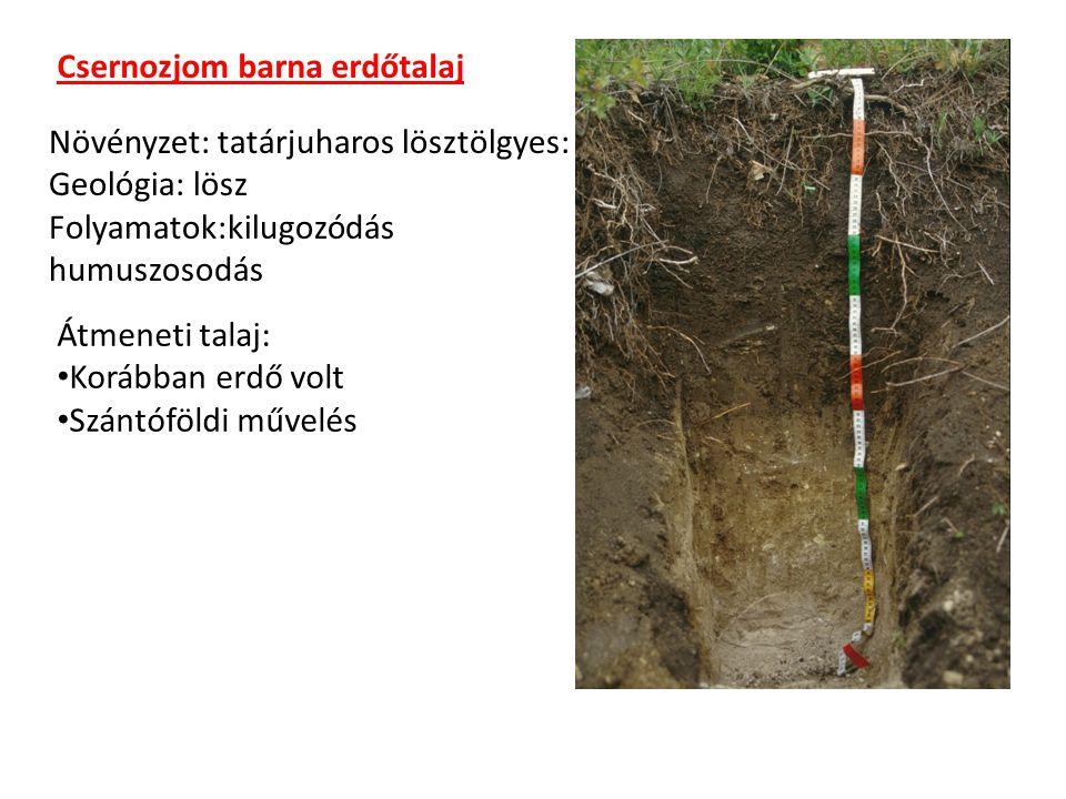Csernozjom barna erdőtalaj Növényzet: tatárjuharos lösztölgyes: Geológia: lösz Folyamatok:kilugozódás humuszosodás Átmeneti talaj: Korábban erdő volt