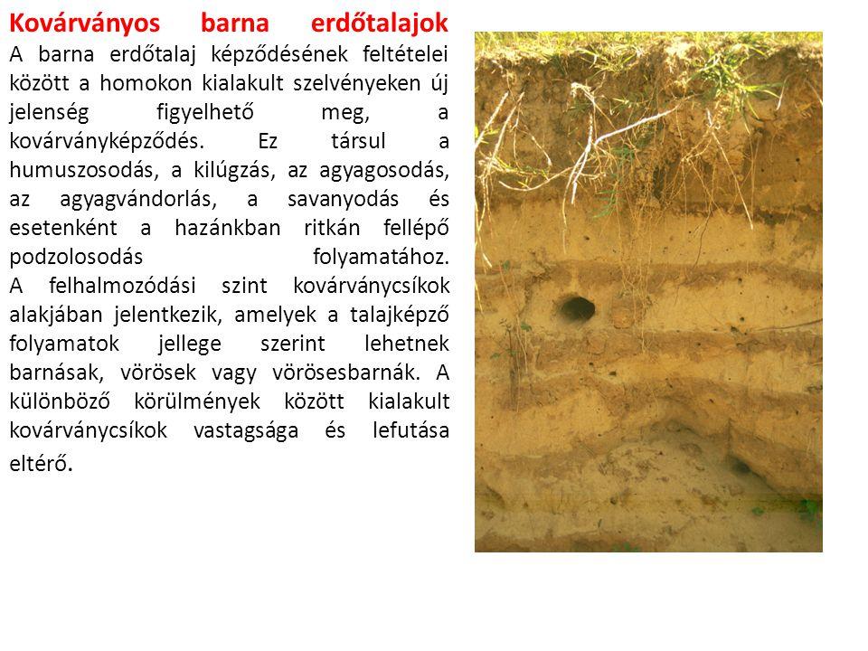 Kovárványos barna erdőtalajok A barna erdőtalaj képződésének feltételei között a homokon kialakult szelvényeken új jelenség figyelhető meg, a kovárványképződés.