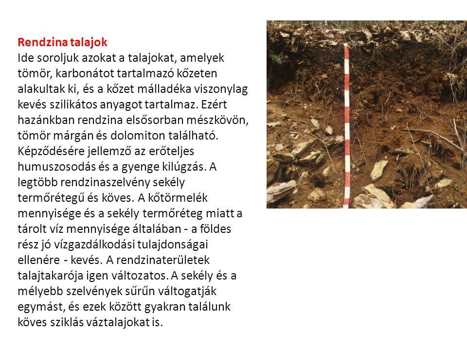 Rendzina talajok Ide soroljuk azokat a talajokat, amelyek tömör, karbonátot tartalmazó kőzeten alakultak ki, és a kőzet málladéka viszonylag kevés szi