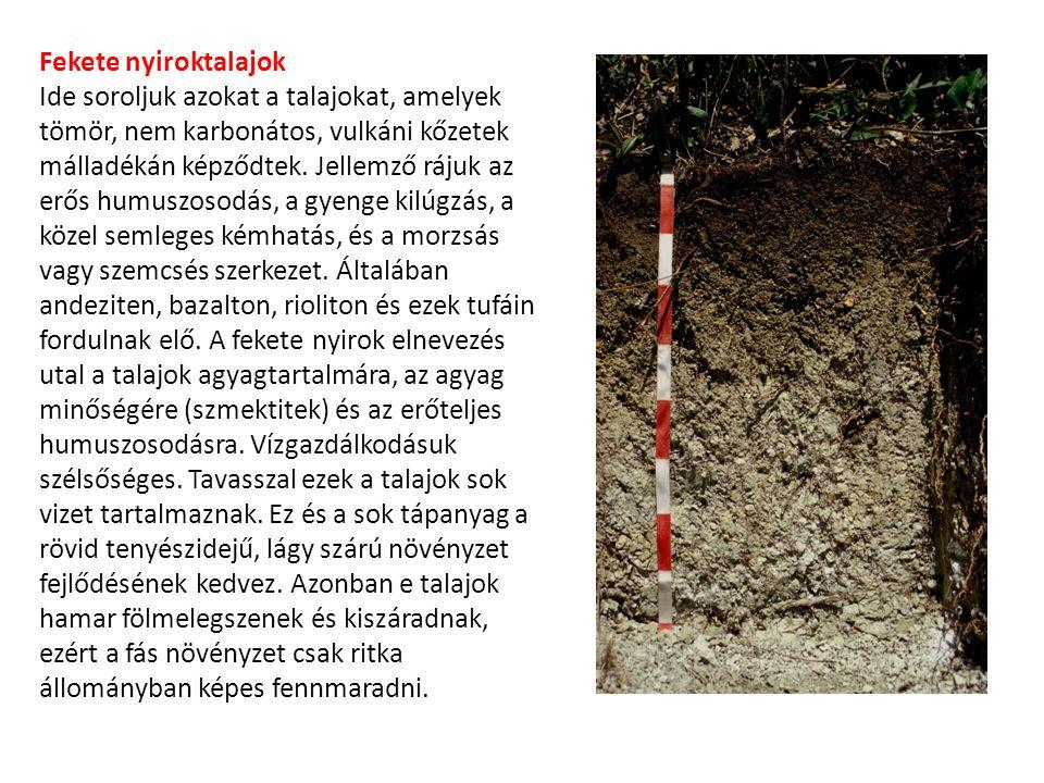 Fekete nyiroktalajok Ide soroljuk azokat a talajokat, amelyek tömör, nem karbonátos, vulkáni kőzetek málladékán képződtek. Jellemző rájuk az erős humu