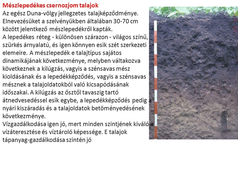 Mészlepedékes csernozjom talajok Az egész Duna-völgy jellegzetes talajképződménye. Elnevezésüket a szelvényükben általában 30-70 cm között jelentkező