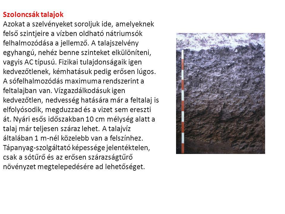 Szoloncsák talajok Azokat a szelvényeket soroljuk ide, amelyeknek felső szintjeire a vízben oldható nátriumsók felhalmozódása a jellemző. A talajszelv