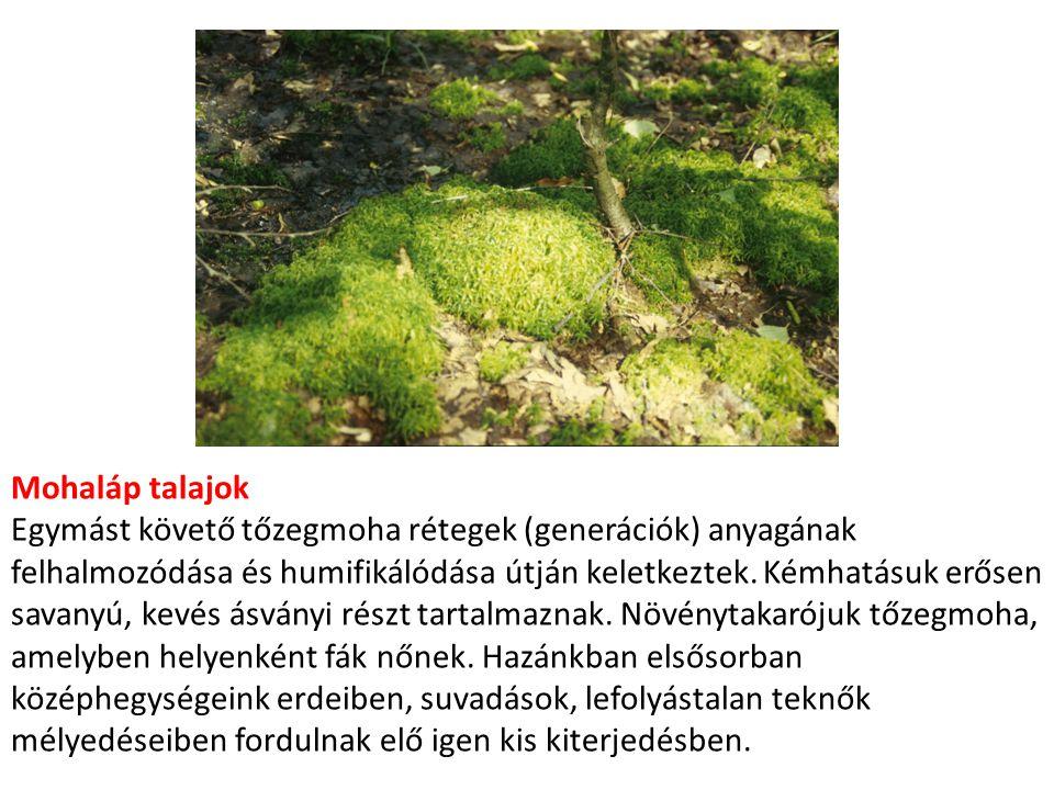 Mohaláp talajok Egymást követő tőzegmoha rétegek (generációk) anyagának felhalmozódása és humifikálódása útján keletkeztek. Kémhatásuk erősen savanyú,