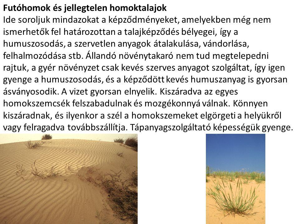 Futóhomok és jellegtelen homoktalajok Ide soroljuk mindazokat a képződményeket, amelyekben még nem ismerhetők fel határozottan a talajképződés bélyege
