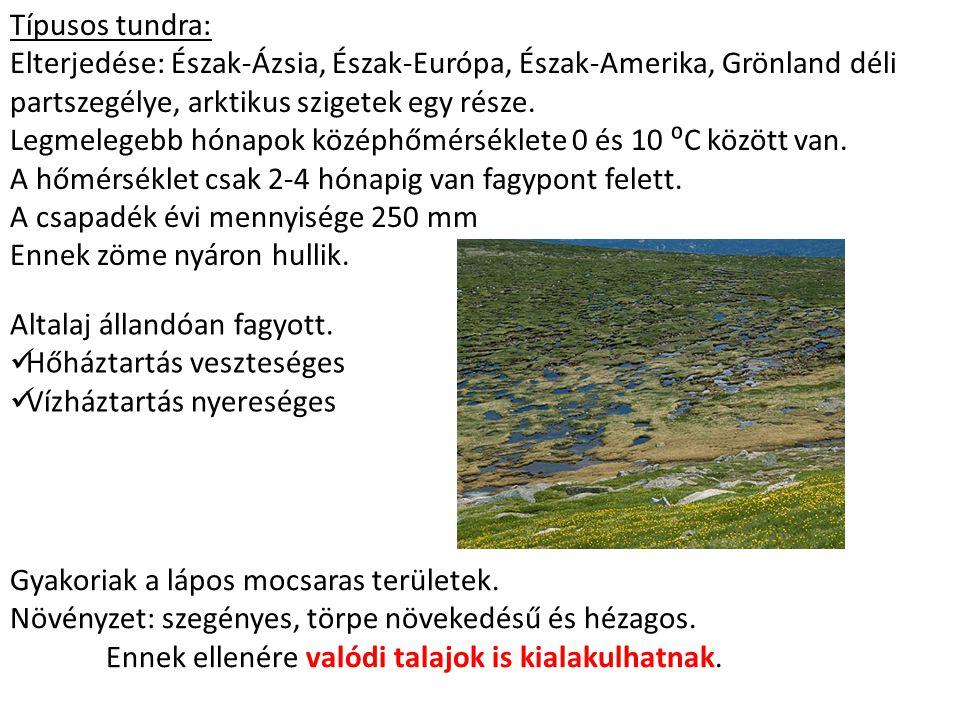 Típusos tundra: Elterjedése: Észak-Ázsia, Észak-Európa, Észak-Amerika, Grönland déli partszegélye, arktikus szigetek egy része. Legmelegebb hónapok kö