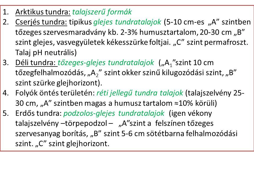 """1.Arktikus tundra: talajszerű formák 2.Cserjés tundra: tipikus glejes tundratalajok (5-10 cm-es """"A"""" szintben tőzeges szervesmaradvány kb. 2-3% humuszt"""