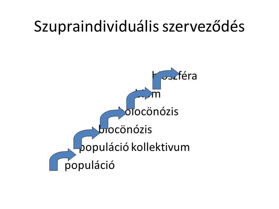 Szupraindividuális szerveződés bioszféra biom holocönózis biocönózis populáció kollektivum populáció