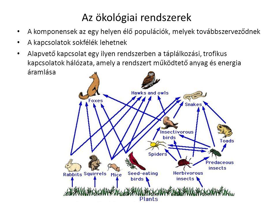 Az ökológiai rendszerek A komponensek az egy helyen élő populációk, melyek továbbszerveződnek A kapcsolatok sokfélék lehetnek Alapvető kapcsolat egy i