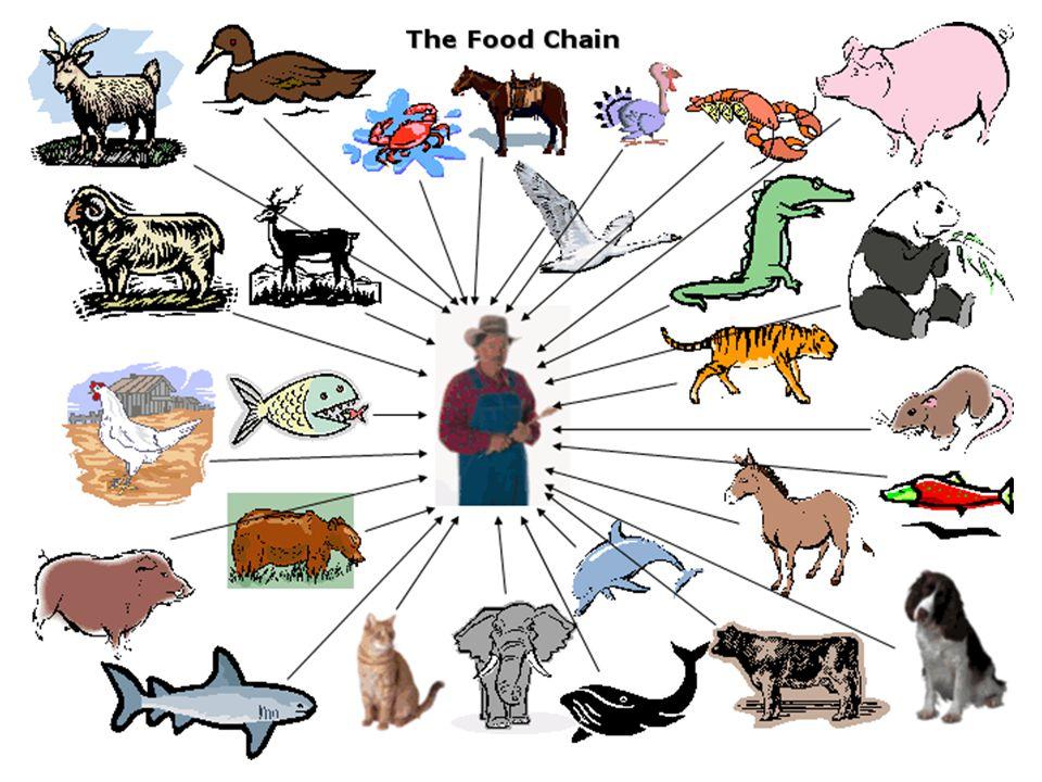 Biológiai organizációs szintek Egyed alatti (intraindividuális) szintek Egyed (individuális szint) (soksejtű egyed) Egyed feletti (szupraindividuális) szint populáció >>>>>bioszféra A magasabb szerveződésű szintek mindig magukban foglalják az alacsonyabb szerveződésű szinteket !