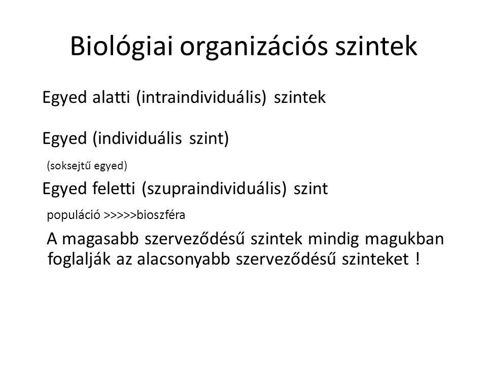 Biológiai organizációs szintek Egyed alatti (intraindividuális) szintek Egyed (individuális szint) (soksejtű egyed) Egyed feletti (szupraindividuális)