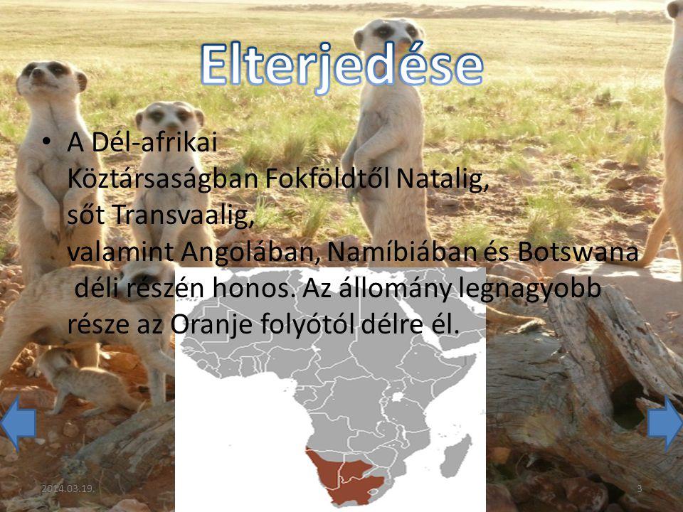 A Dél-afrikai Köztársaságban Fokföldtől Natalig, sőt Transvaalig, valamint Angolában, Namíbiában és Botswana déli részén honos.