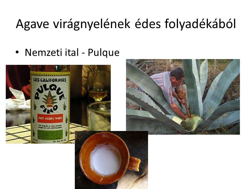 Agave virágnyelének édes folyadékából Nemzeti ital - Pulque
