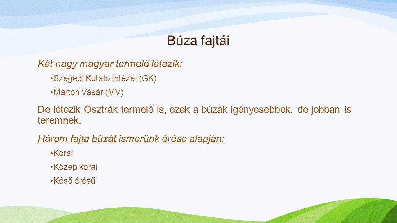 Búza fajtái Két nagy magyar termelő létezik: Szegedi Kutató Intézet (GK) Marton Vásár (MV) De létezik Osztrák termelő is, ezek a búzák igényesebbek, d