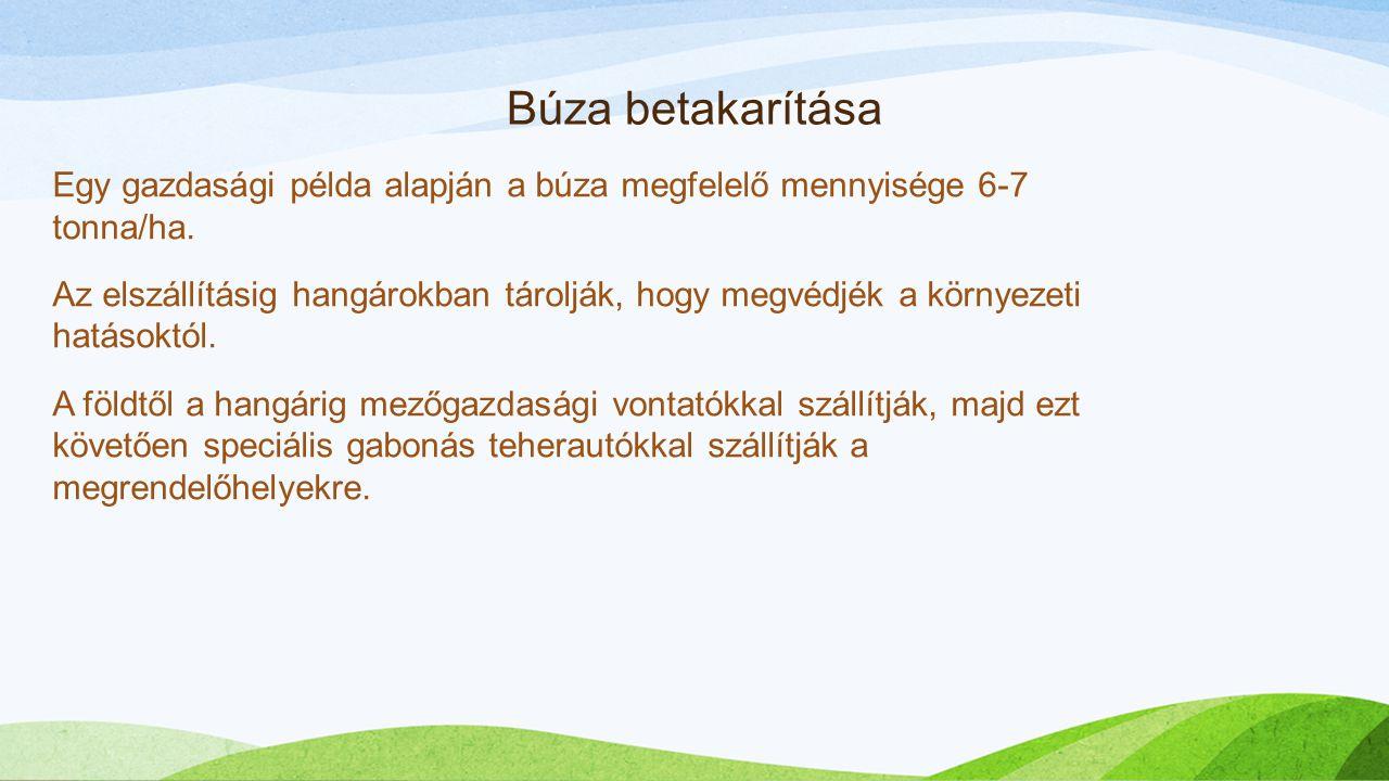Búza betakarítása Egy gazdasági példa alapján a búza megfelelő mennyisége 6-7 tonna/ha. Az elszállításig hangárokban tárolják, hogy megvédjék a környe