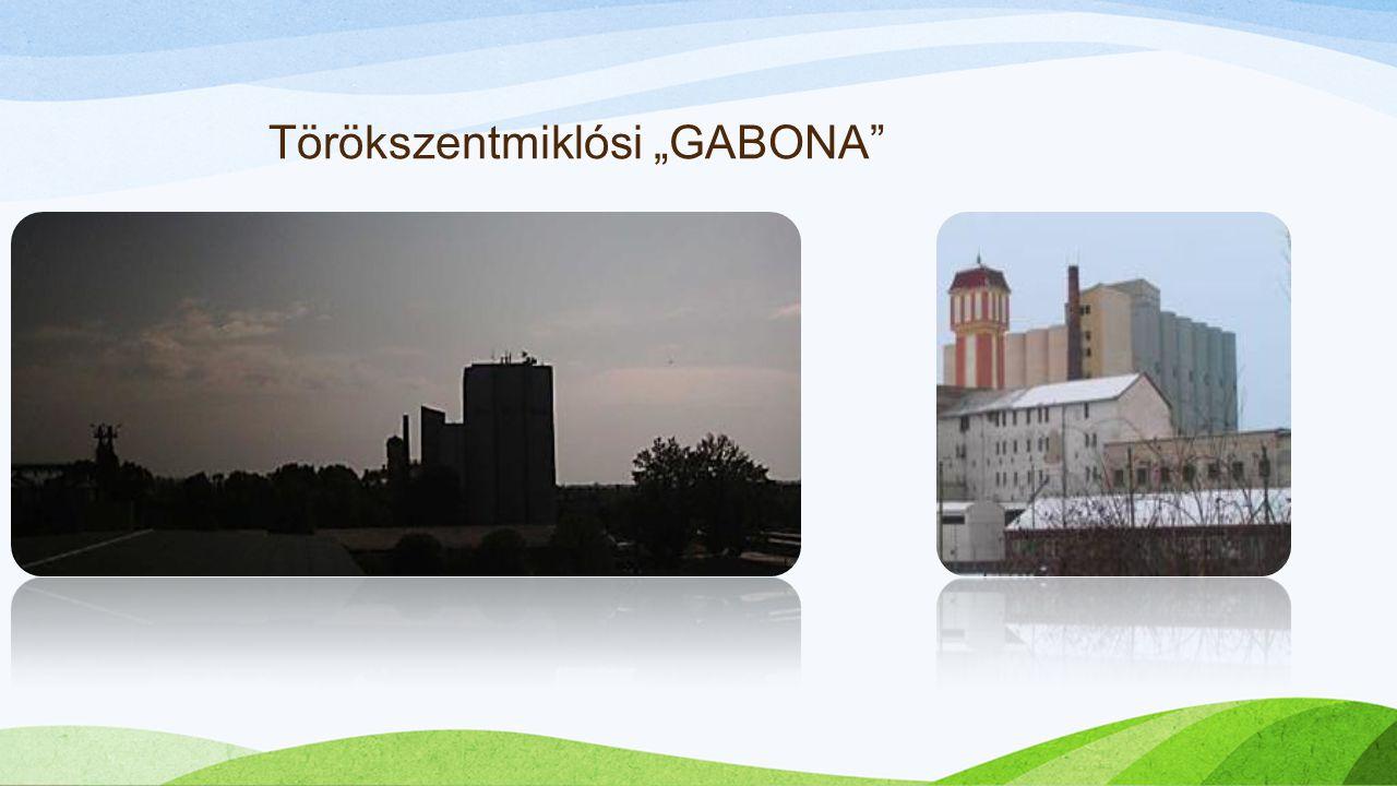 """Törökszentmiklósi """"GABONA"""""""