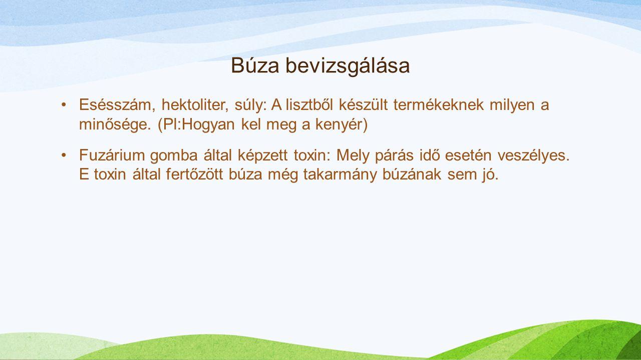Búza bevizsgálása Esésszám, hektoliter, súly: A lisztből készült termékeknek milyen a minősége. (Pl:Hogyan kel meg a kenyér) Fuzárium gomba által képz