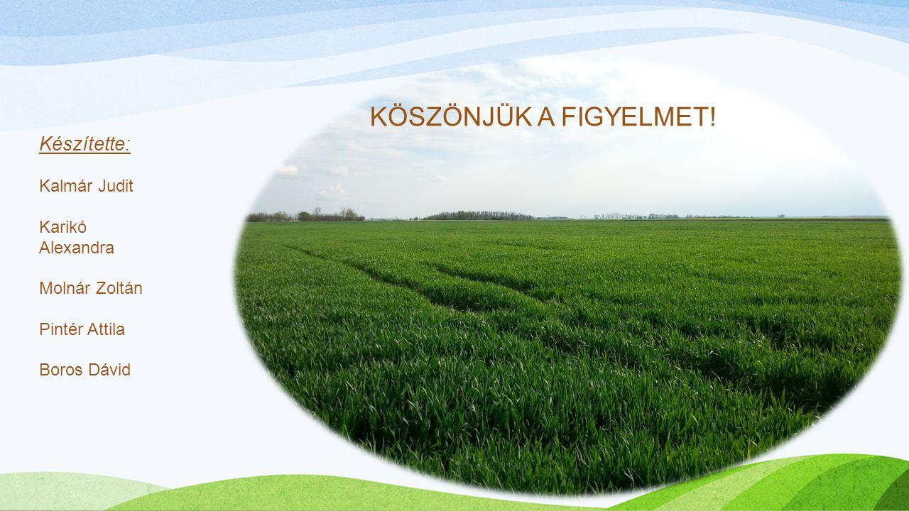 KÖSZÖNJÜK A FIGYELMET! Készítette: Kalmár Judit Karikó Alexandra Molnár Zoltán Pintér Attila Boros Dávid