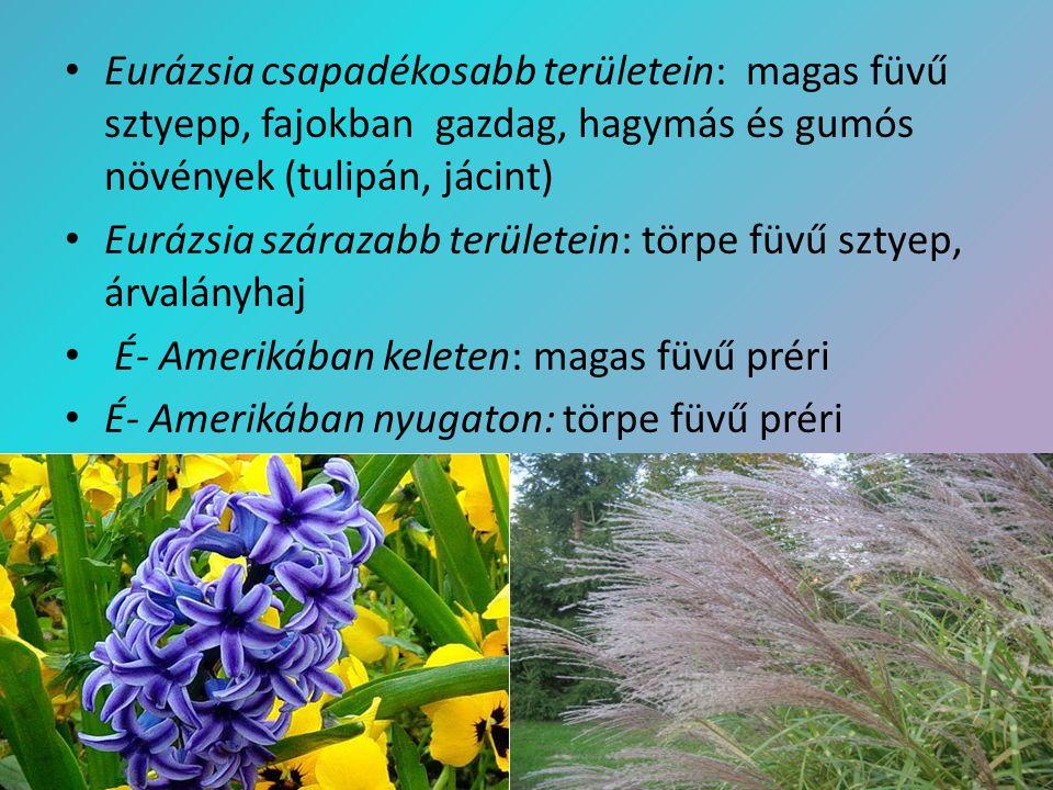 Eurázsia csapadékosabb területein: magas füvű sztyepp, fajokban gazdag, hagymás és gumós növények (tulipán, jácint) Eurázsia szárazabb területein: tör