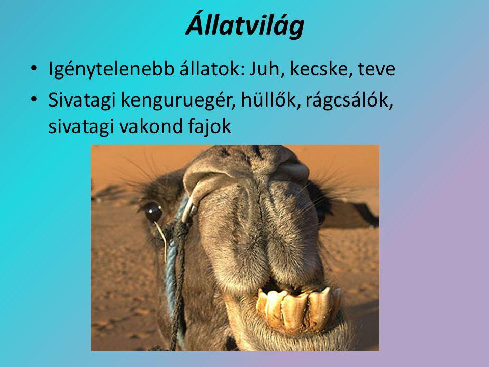 Állatvilág Igénytelenebb állatok: Juh, kecske, teve Sivatagi kenguruegér, hüllők, rágcsálók, sivatagi vakond fajok