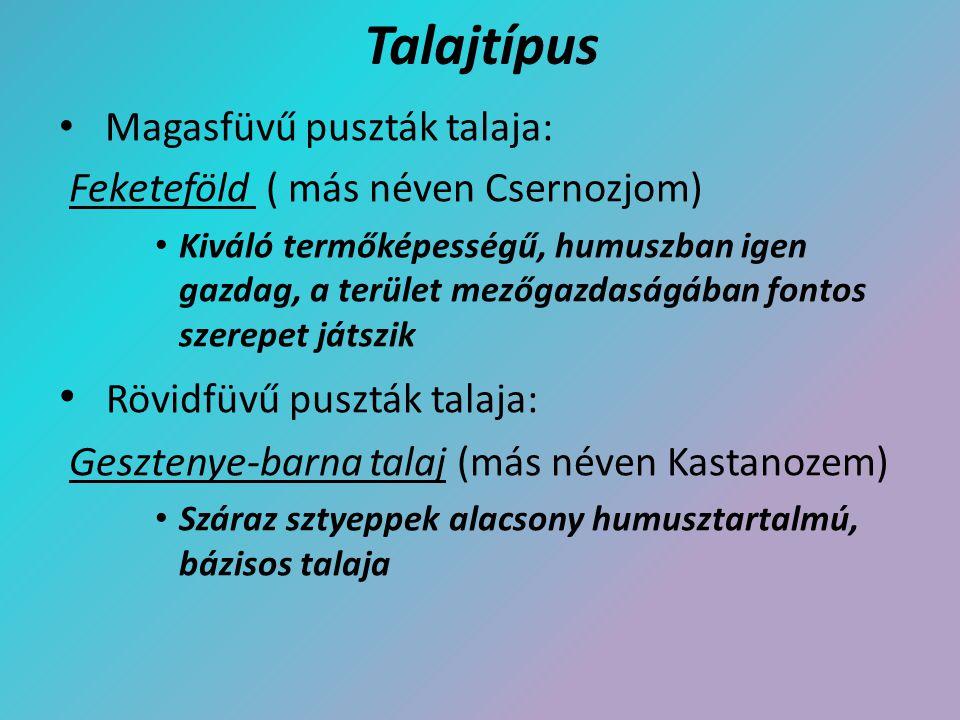 Talajtípus Magasfüvű puszták talaja: Feketeföld ( más néven Csernozjom) Kiváló termőképességű, humuszban igen gazdag, a terület mezőgazdaságában fonto
