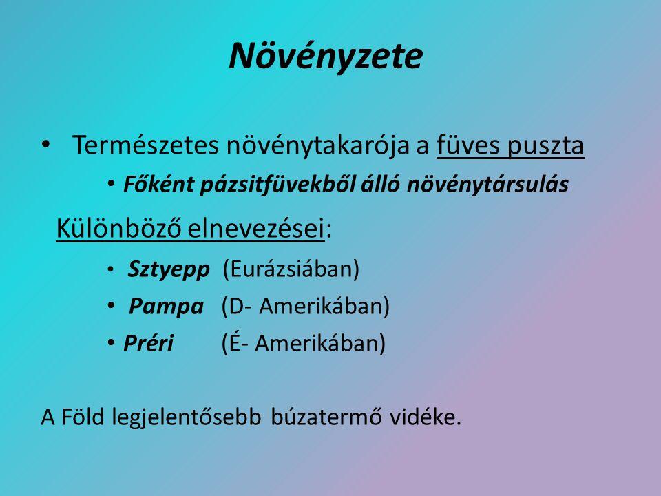 Növényzete Természetes növénytakarója a füves puszta Főként pázsitfüvekből álló növénytársulás Különböző elnevezései: Sztyepp (Eurázsiában) Pampa (D-