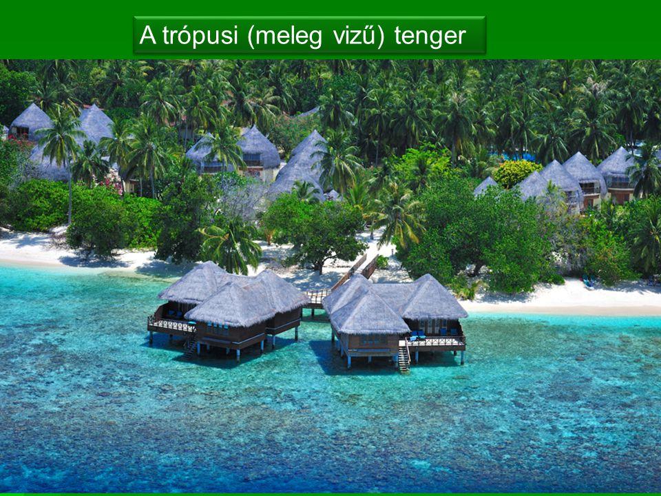 A trópusi (meleg vizű) tenger