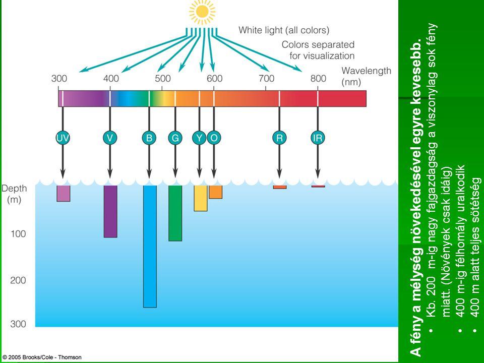 A fény a mélység növekedésével egyre kevesebb. Kb. 200 m-ig nagy fajgazdagság a viszonylag sok fény miatt. (Növények csak idáig) 400 m-ig félhomály ur