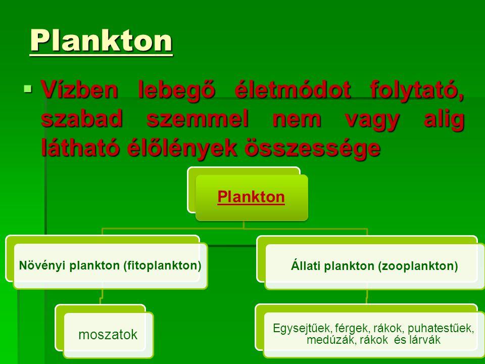 Plankton  Vízben lebegő életmódot folytató, szabad szemmel nem vagy alig látható élőlények összessége Plankton Növényi plankton (fitoplankton) moszat
