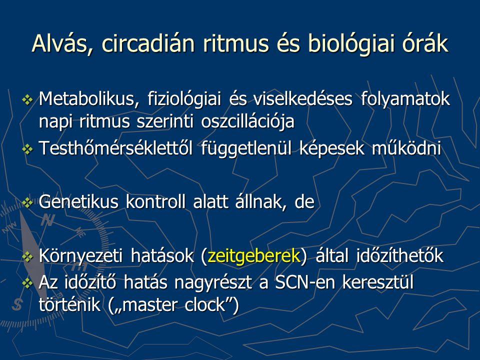 Alvás, circadián ritmus és biológiai órák  Metabolikus, fiziológiai és viselkedéses folyamatok napi ritmus szerinti oszcillációja  Testhőmérséklettő