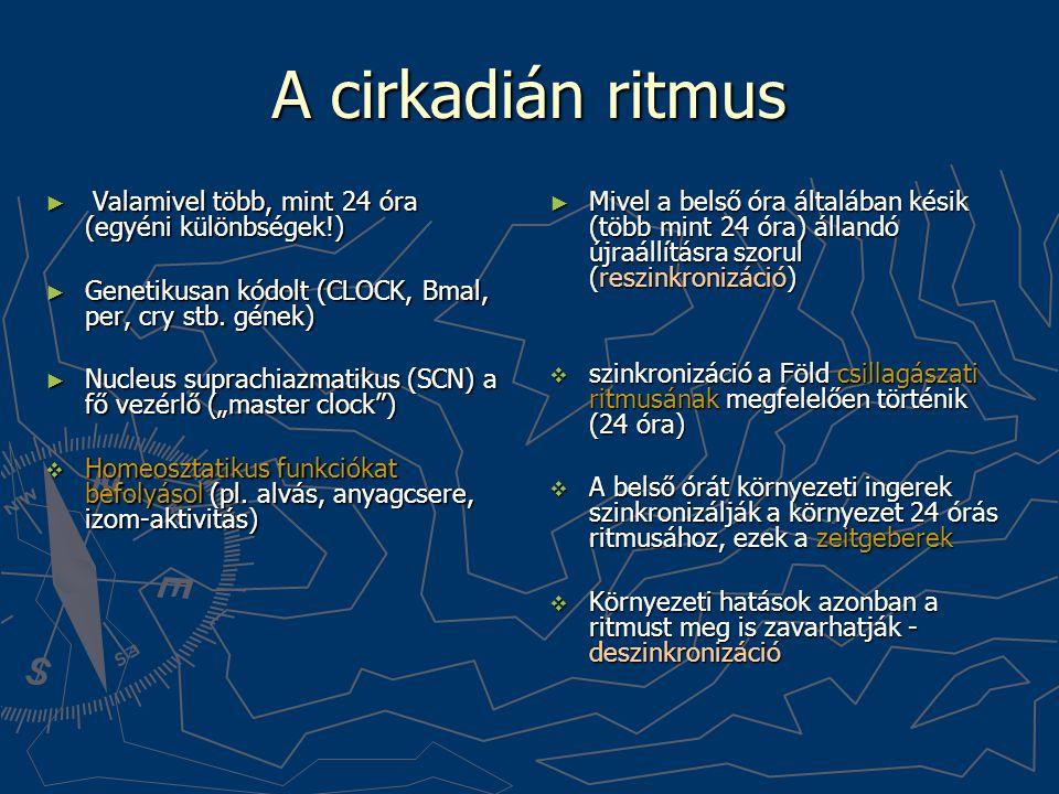 A cirkadián ritmus ► Valamivel több, mint 24 óra (egyéni különbségek!) ► Genetikusan kódolt (CLOCK, Bmal, per, cry stb. gének) ► Nucleus suprachiazmat