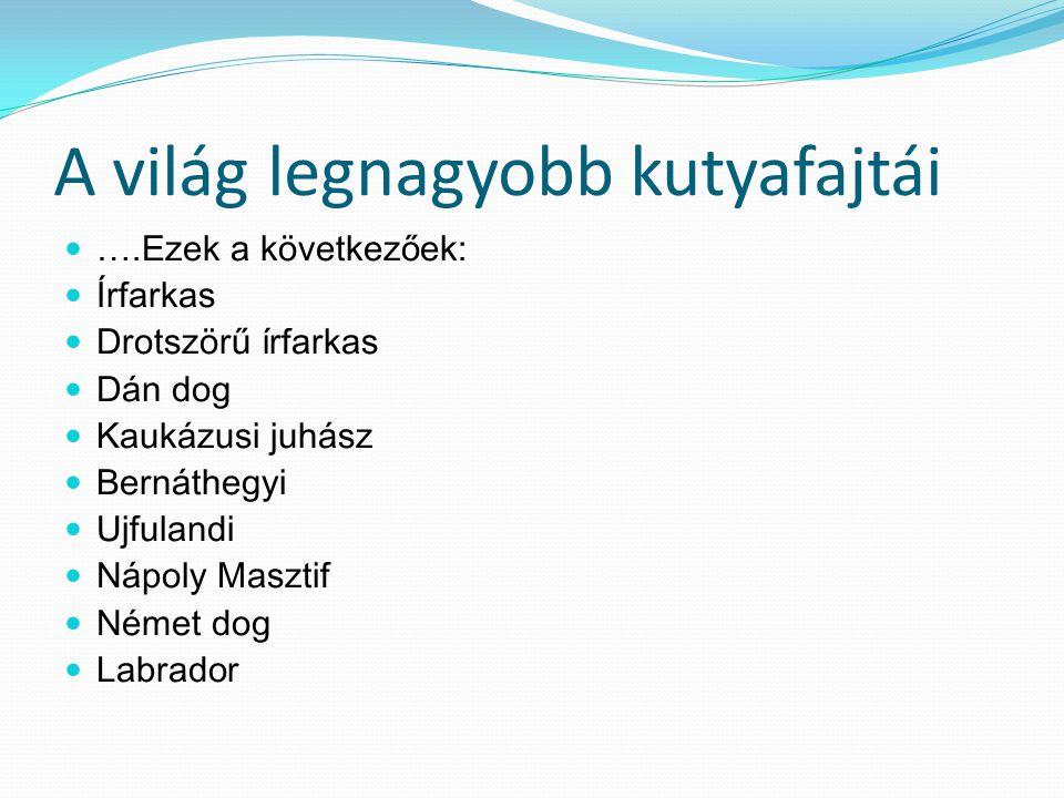 A világ legnagyobb kutyafajtái ….Ezek a következőek: Írfarkas Drotszörű írfarkas Dán dog Kaukázusi juhász Bernáthegyi Ujfulandi Nápoly Masztif Német dog Labrador