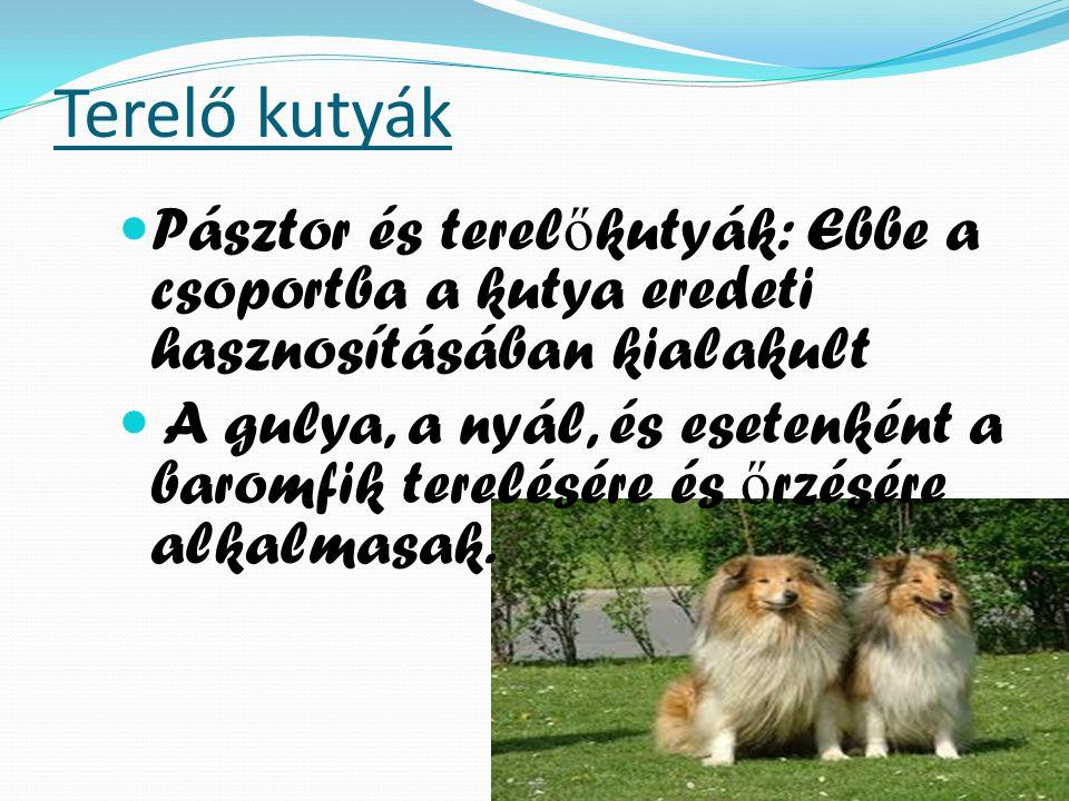 Terelő kutyák Pásztor és terel ő kutyák: Ebbe a csoportba a kutya eredeti hasznosításában kialakult A gulya, a nyál, és esetenként a baromfik terelésére és ő rzésére alkalmasak.