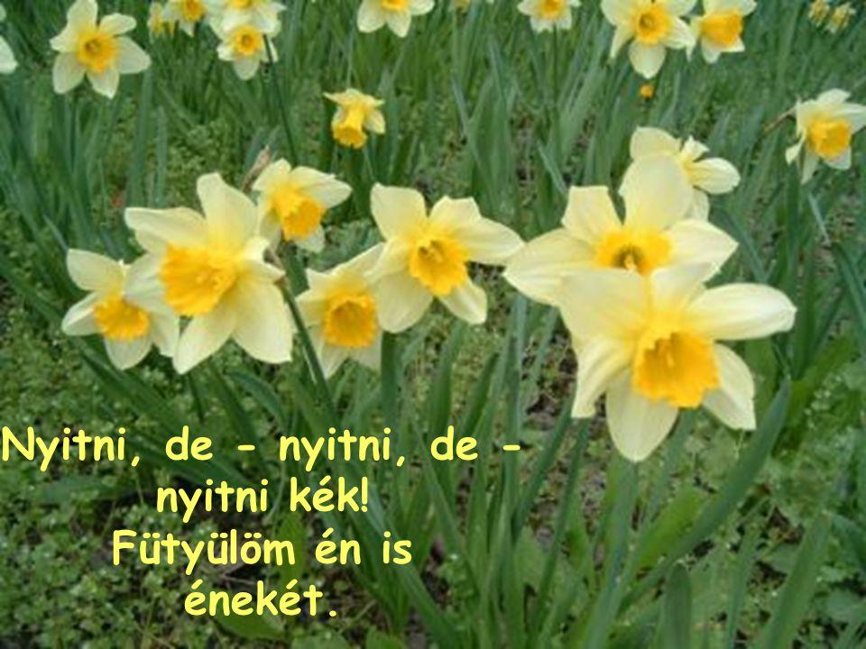 Nyitni kék, fütyüli, nyitni kék, szívnek és tavasznak nyílni kék!