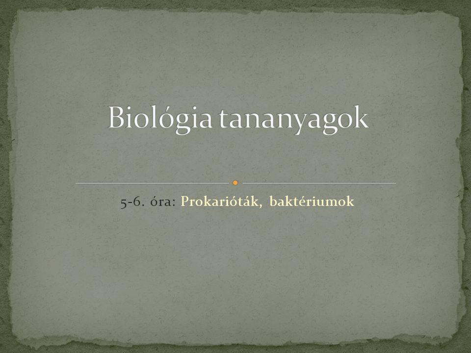 5-6. óra: Prokarióták, baktériumok