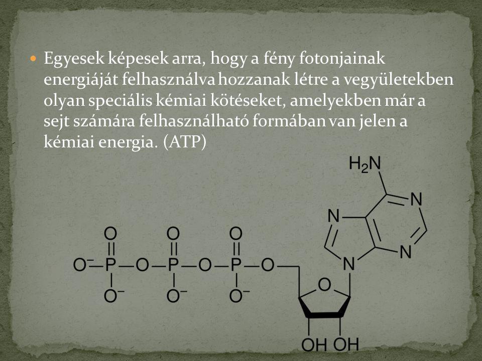 Egyesek képesek arra, hogy a fény fotonjainak energiáját felhasználva hozzanak létre a vegyületekben olyan speciális kémiai kötéseket, amelyekben már