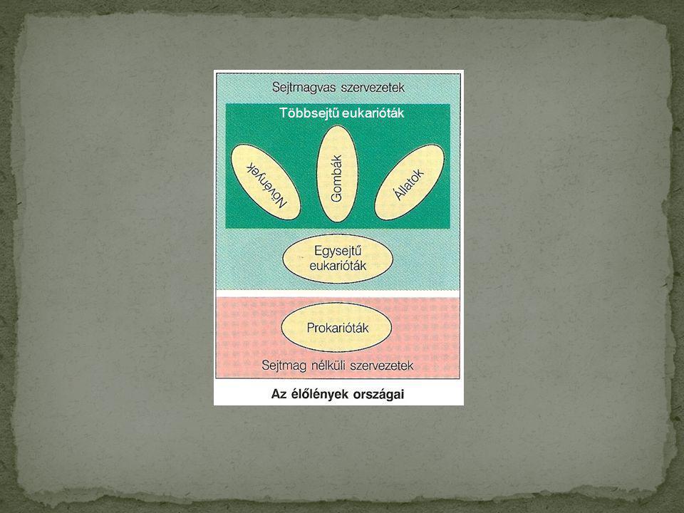 Egyesek képesek arra, hogy a fény fotonjainak energiáját felhasználva hozzanak létre a vegyületekben olyan speciális kémiai kötéseket, amelyekben már a sejt számára felhasználható formában van jelen a kémiai energia.