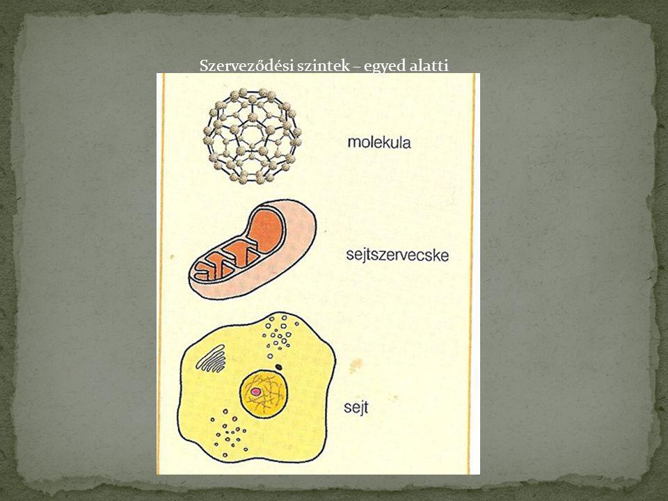 A baktériumok a bioszférában szinte mindenütt megtalálhatók.