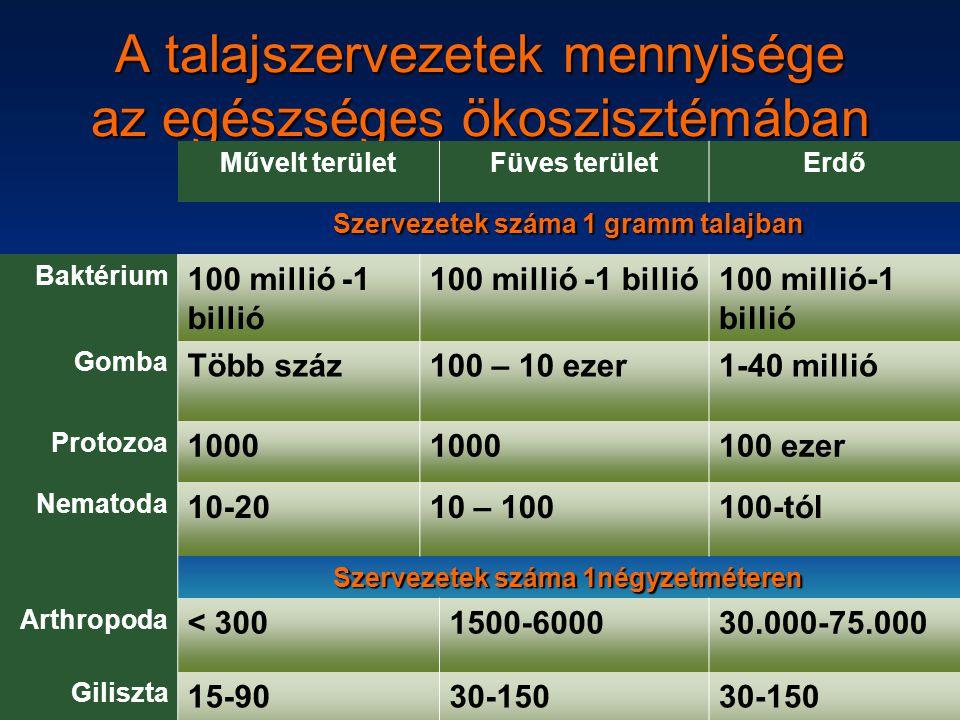 A talajszervezetek mennyisége az egészséges ökoszisztémában Művelt területFüves területErdő Szervezetek száma 1 gramm talajban Baktérium 100 millió -1