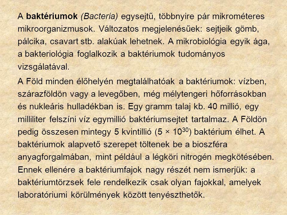  Létfontosságú sejtalkotók sejtfal citoplazmahártya, citoplazma, maganyag  Nem létfontosságú sejtalkotók burok, csilló, fimbria, spóra A BAKTÉRIUMOK SEJTSZERKEZETE