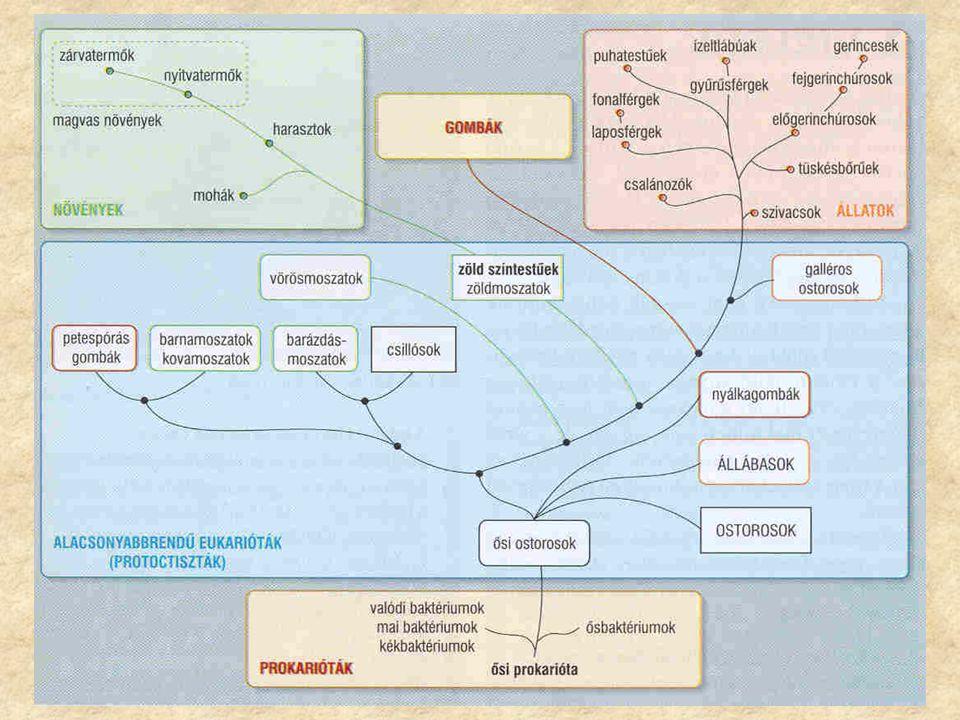 A vírusok, a prokarióták és az állati egysejtűek