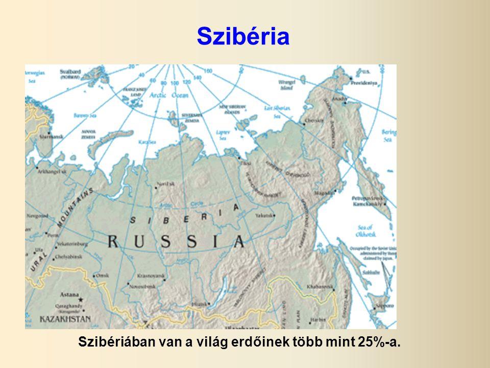 Szibéria Szibériában van a világ erdőinek több mint 25%-a.