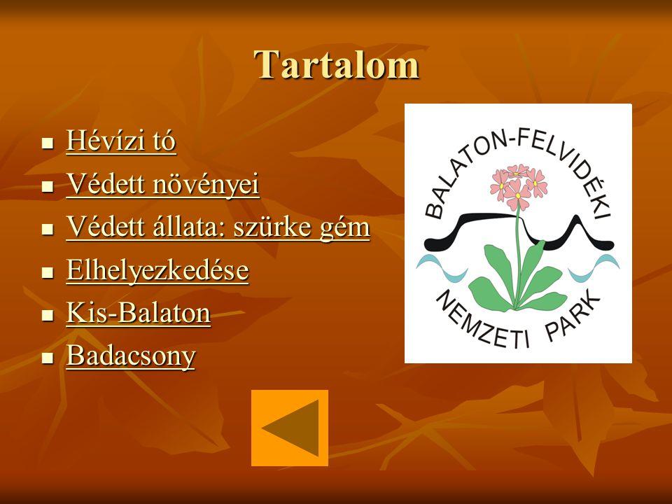 Tartalom Hévízi tó Hévízi tó Hévízi tó Hévízi tó Védett növényei Védett növényei Védett növényei Védett növényei Védett állata: szürke gém Védett állata: szürke gém Védett állata: szürke gém Védett állata: szürke gém Elhelyezkedése Elhelyezkedése Elhelyezkedése Kis-Balaton Kis-Balaton Kis-Balaton Badacsony Badacsony Badacsony