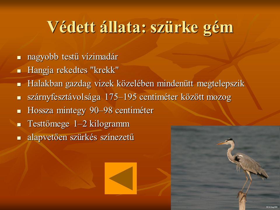 Kis-Balaton A Kis-Balaton három tényező együttes hatásának köszönheti létét A Kis-Balaton három tényező együttes hatásának köszönheti lététKis-Balaton a Zala folyó is itt rakta le hordalékát a Zala folyó is itt rakta le hordalékát Visszatelepült számos ritka madárfaj, mint a nagy kócsag Visszatelepült számos ritka madárfaj, mint a nagy kócsagnagy kócsagnagy kócsag