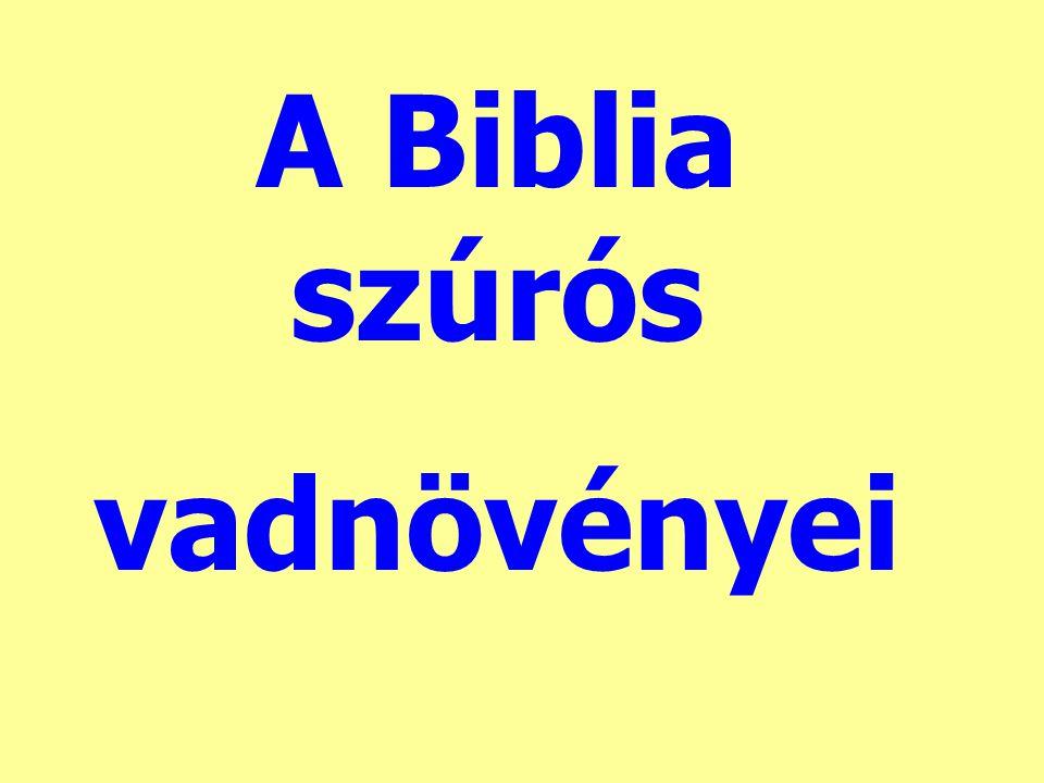 A Biblia szúrós vadnövényei
