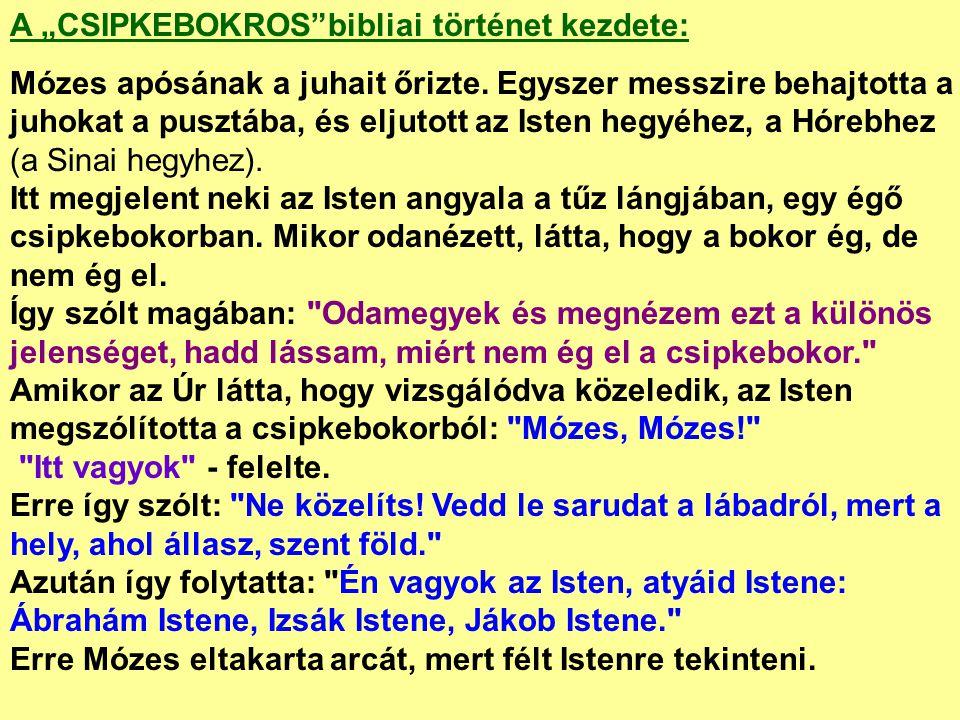 """A """"CSIPKEBOKROS""""bibliai történet kezdete: Mózes apósának a juhait őrizte. Egyszer messzire behajtotta a juhokat a pusztába, és eljutott az Isten hegyé"""