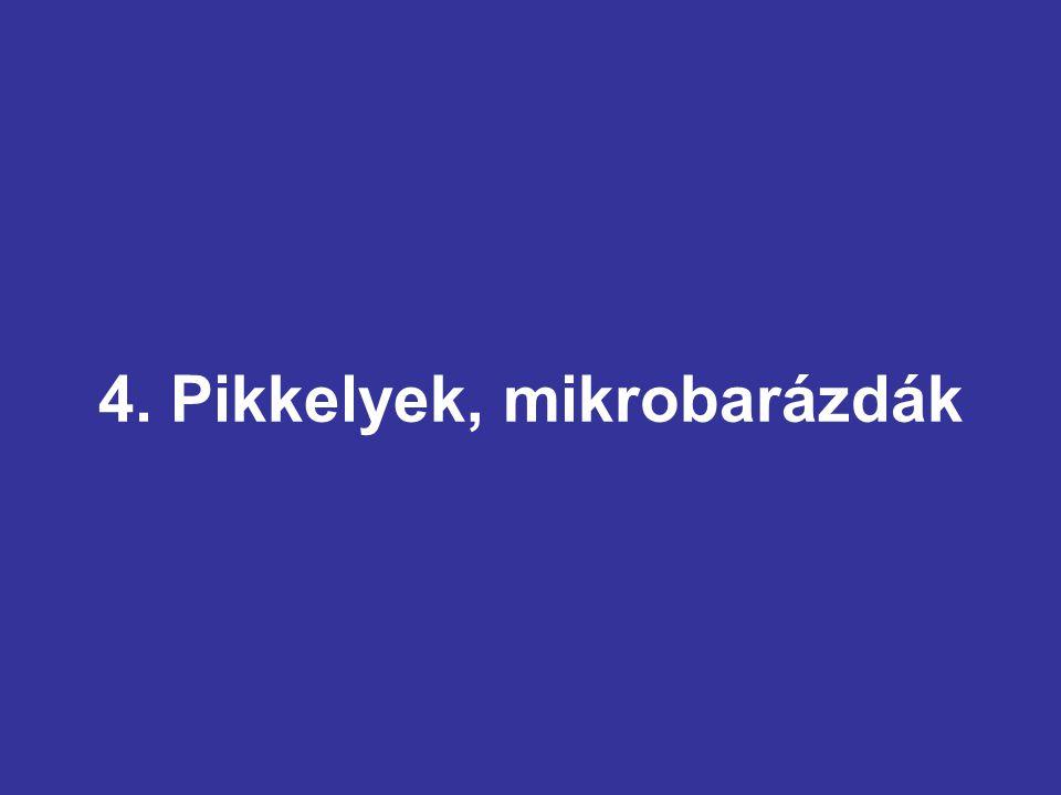 4. Pikkelyek, mikrobarázdák
