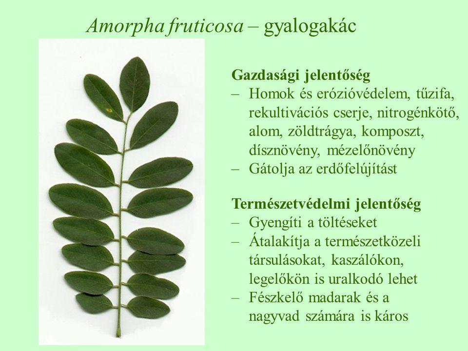 Természetvédelmi jelentőség –Gyengíti a töltéseket –Átalakítja a természetközeli társulásokat, kaszálókon, legelőkön is uralkodó lehet –Fészkelő madarak és a nagyvad számára is káros Amorpha fruticosa – gyalogakác Gazdasági jelentőség –Homok és erózióvédelem, tűzifa, rekultivációs cserje, nitrogénkötő, alom, zöldtrágya, komposzt, dísznövény, mézelőnövény –Gátolja az erdőfelújítást