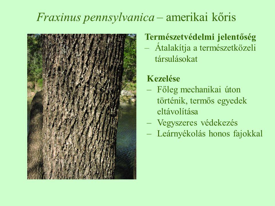 Természetvédelmi jelentőség –Átalakítja a természetközeli társulásokat Kezelése –Főleg mechanikai úton történik, termős egyedek eltávolítása –Vegyszeres védekezés –Leárnyékolás honos fajokkal Fraxinus pennsylvanica – amerikai kőris
