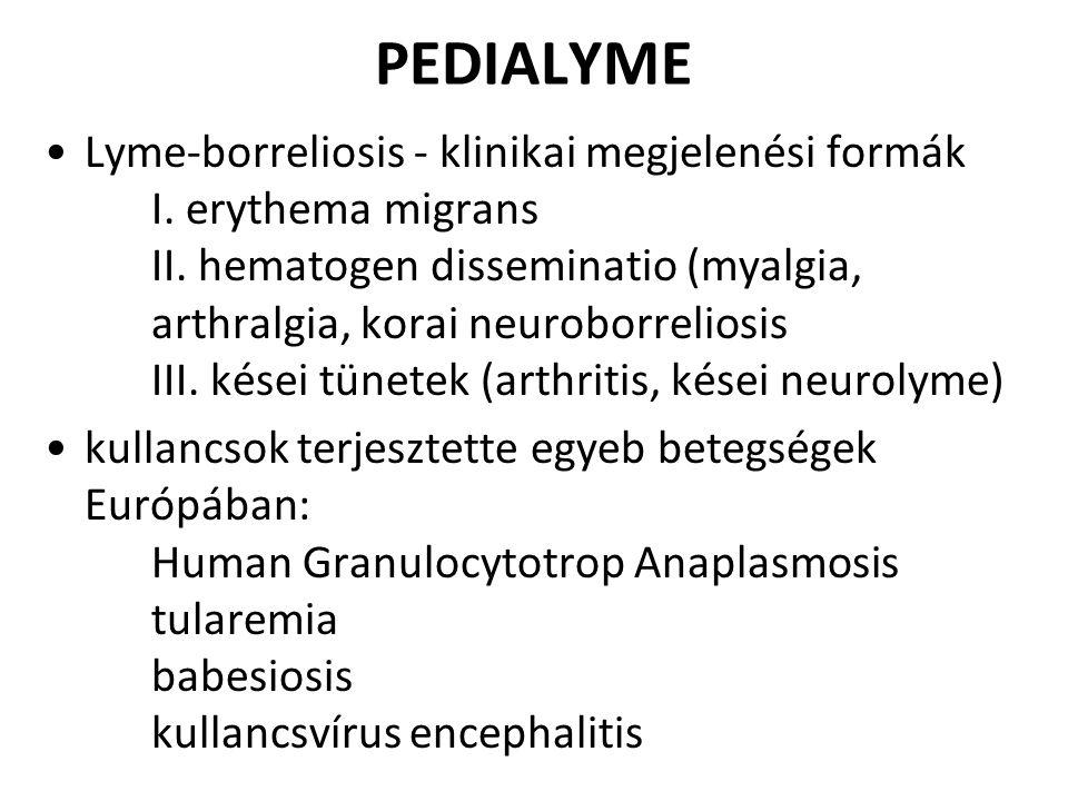 PEDIALYME Lyme-borreliosis - klinikai megjelenési formák I. erythema migrans II. hematogen disseminatio (myalgia, arthralgia, korai neuroborreliosis I